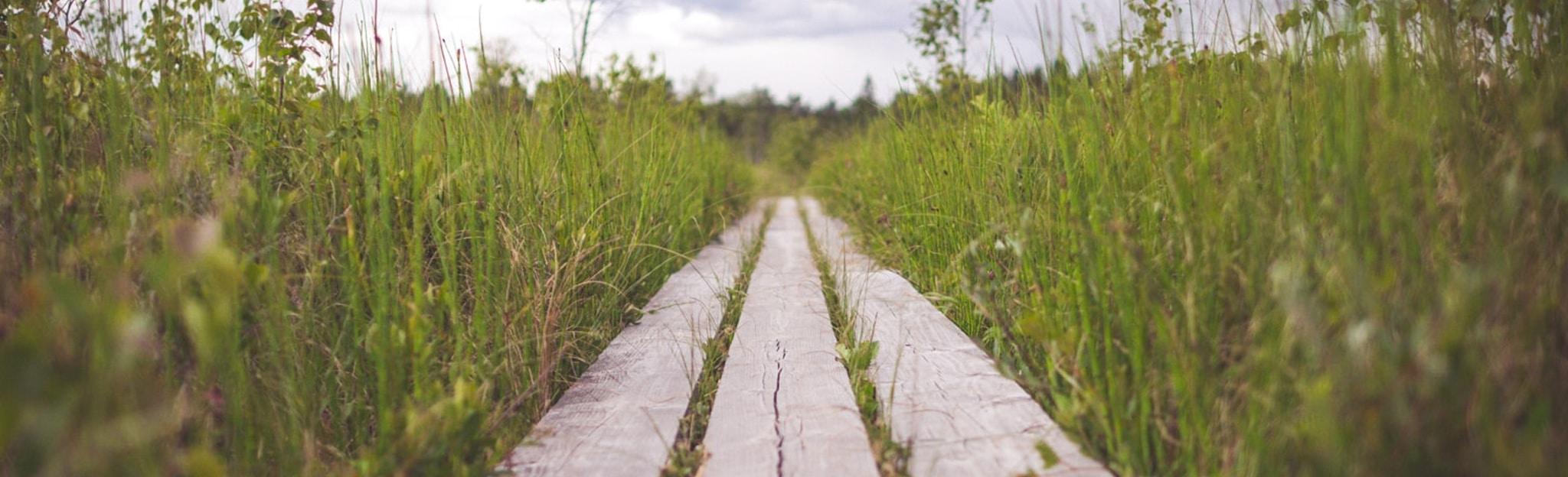 Ein Weg im Gras